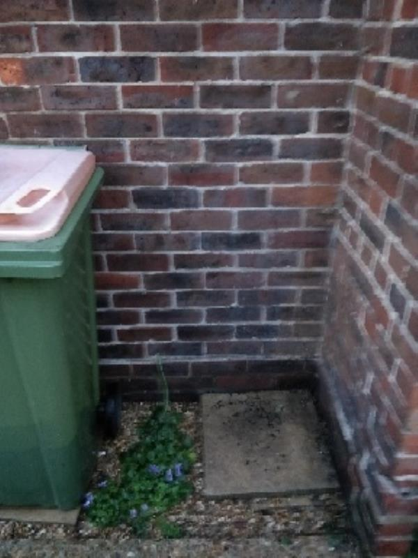someone has stolen my rubbish bin! it was a bit broken, but still useable. I've looked in nearby streets but can't find it-51 Sandal Street, London, E15 3NP