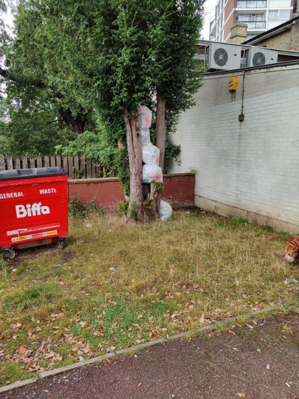 Refuse sacks wedged in tree.  Please remove.-22 Bampton Road, London, SE23 2BE
