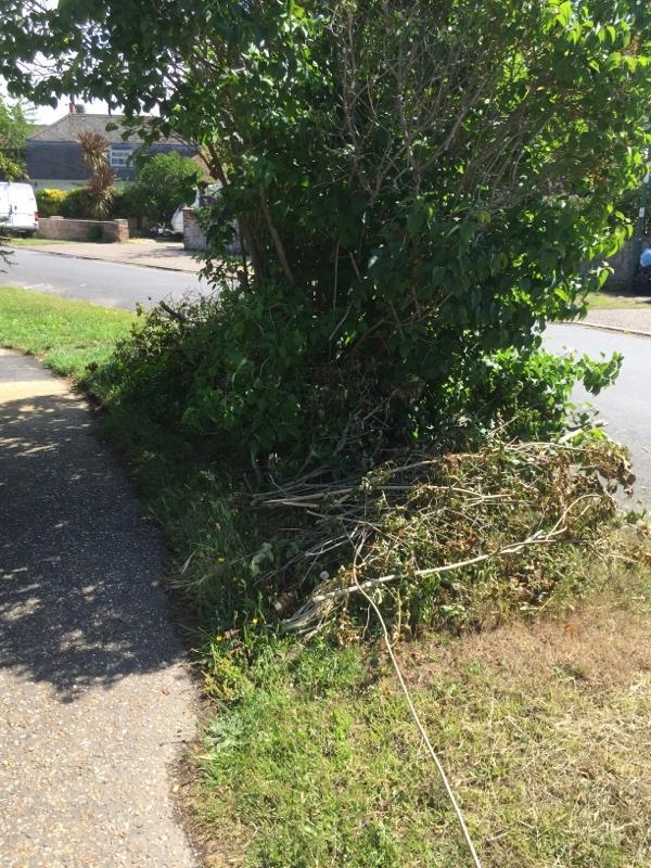 Someone has cut a bush back and left all the cuttings -3 Bucksham Avenue, Bognor Regis, PO21 5DT