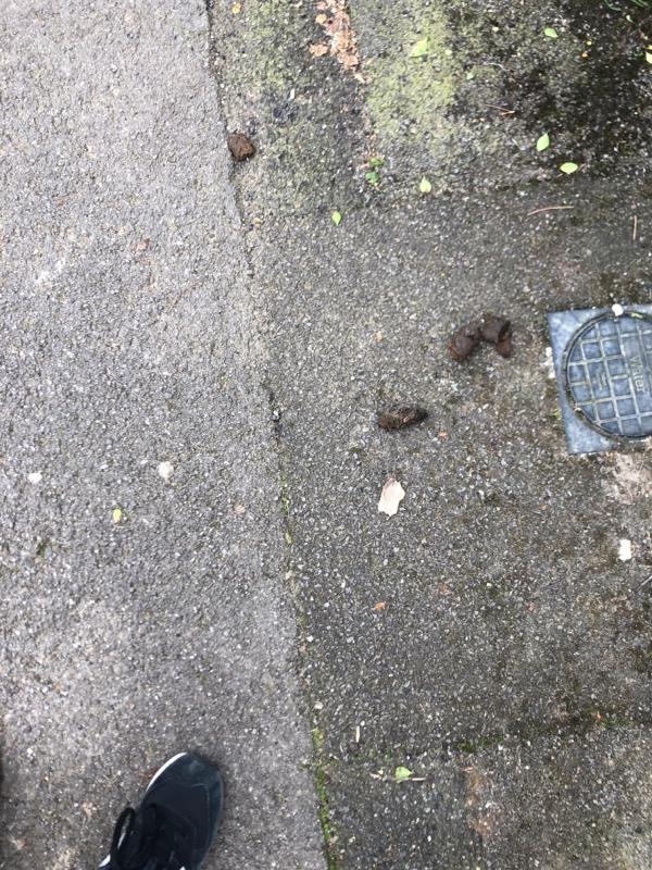 Dog fouling again-8 Alison Way, Aldershot, GU11 3JX