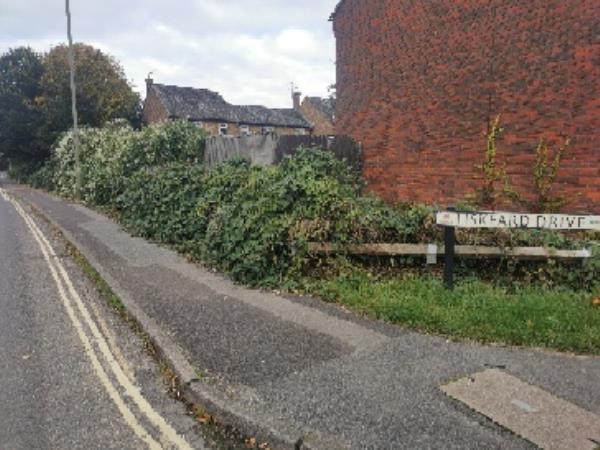 Needs trimming bushes and replace broken wood fence-42 Ballantyne Road, Farnborough, GU14 8SN