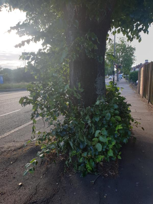 over growth basil blocking pavement -330 Park Avenue, London, UB1 3AR