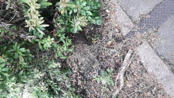 Dumped shrubs and garden waste outside no 28 Cambridge Rd -26a Cambridge Road, Aldershot, GU11 3JY
