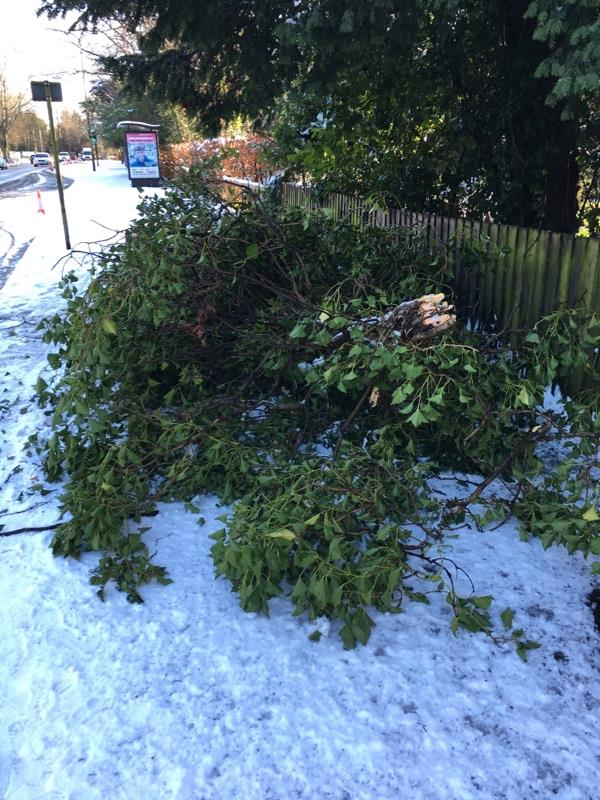 Fallen tree blocking path -341 London Rd, Leicester LE2 3JX, UK