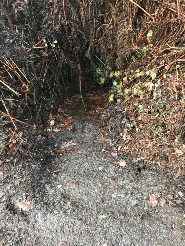 Blocked drains again. -17 Hammingden Ln, Haywards Heath RH17 6SR, UK