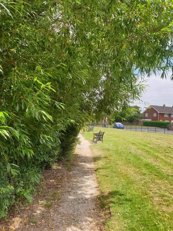 All the trees here are overgrown and are blocking the pathway for people to walk through. There is ASB taking place that is covered by the overgrown trees -76 Rocket Pool Drive, Bilston, WV14 8BD