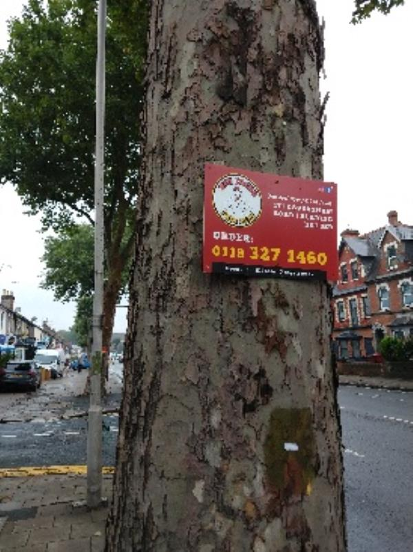 peri peri flyposts screwed to several council plane trees along caversham rd-127 Caversham Road, Reading, RG1 8AS