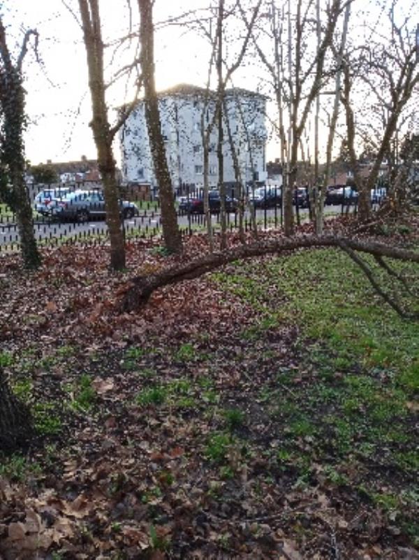 damaged tree, 193 Wensley Road - on the corner of Wensley Road-190 Wensley Road, Reading, RG1 6DP