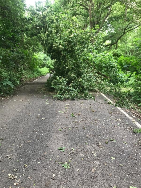 Tree blocking Hazel Ave-37 Brookhouse Road, Farnborough, GU14 0DP