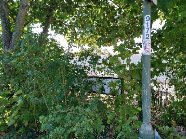 Taynton walk Street sign and Street light blocked by trees and bushes-6 Waldeck Street, Reading, RG1 2RE