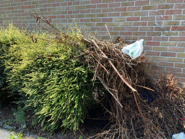 Regularly people dumps all sort rubbish in this spot and behind the hedge and between the property wall.  Don't see any street cleaners coming to clear this spot at all as this rubbish been there for over 2 months!!  I wished people would respect and keep Newham clean as it's only making breeding grounds for pest and all sorts! image 1-16 Yarrow Crescent, London, E6 5UH