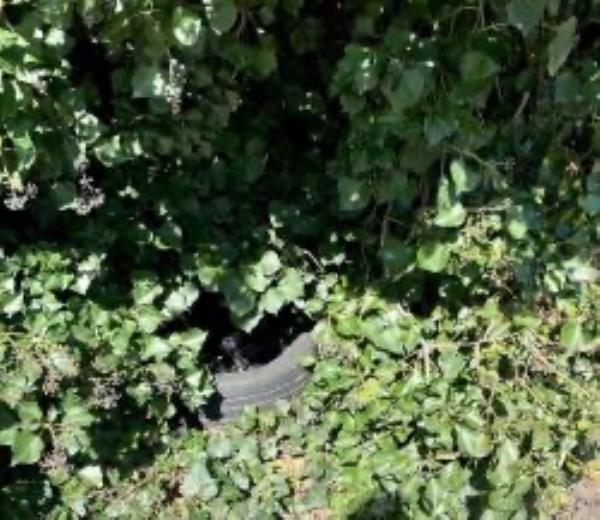 Car tyre amongst the ivy-2 Jews Walk, London, SE26 6PL