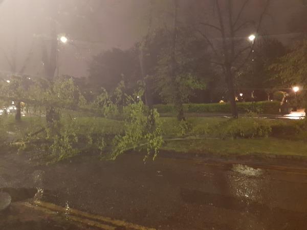 Tree fallen in winds, blocking road.-71 High Street, London, N8 7NT