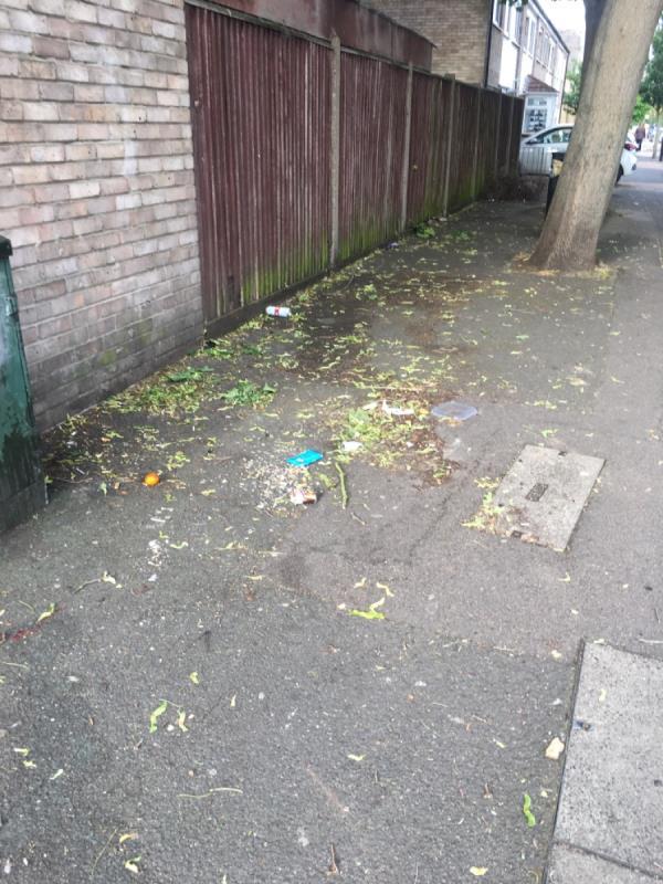 Plants and rubbish-19 Cruikshank Road, London, E15 1SN