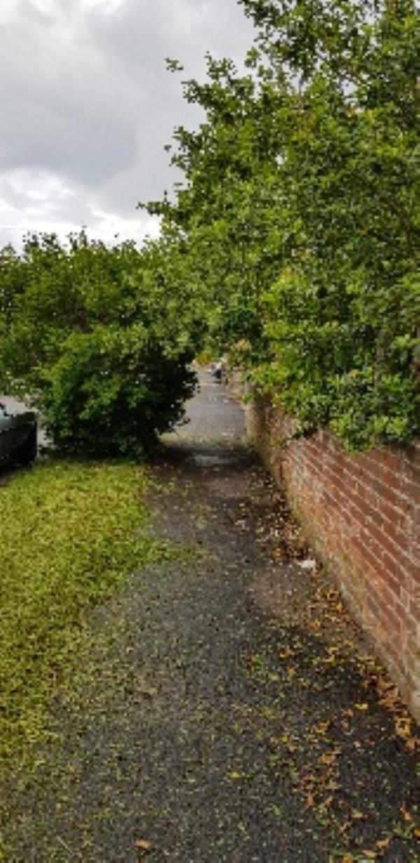 Tree from house garden ( Worthing Rd) & bush from roadside verge (Jubilee Avenue) overhanging pavement-79 Worthing Road, Littlehampton, BN16 3NA
