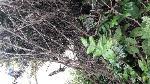 Dumped shrubs and garden waste outside no 28 Cambridge Rd  image 1-26a Cambridge Road, Aldershot, GU11 3JY