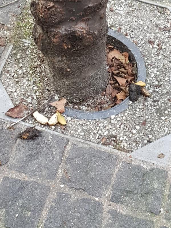 poo by the tree opposite 26 Savage Gardens-26a Savage Gardens, Fenchurch Street, EC3N 4AH