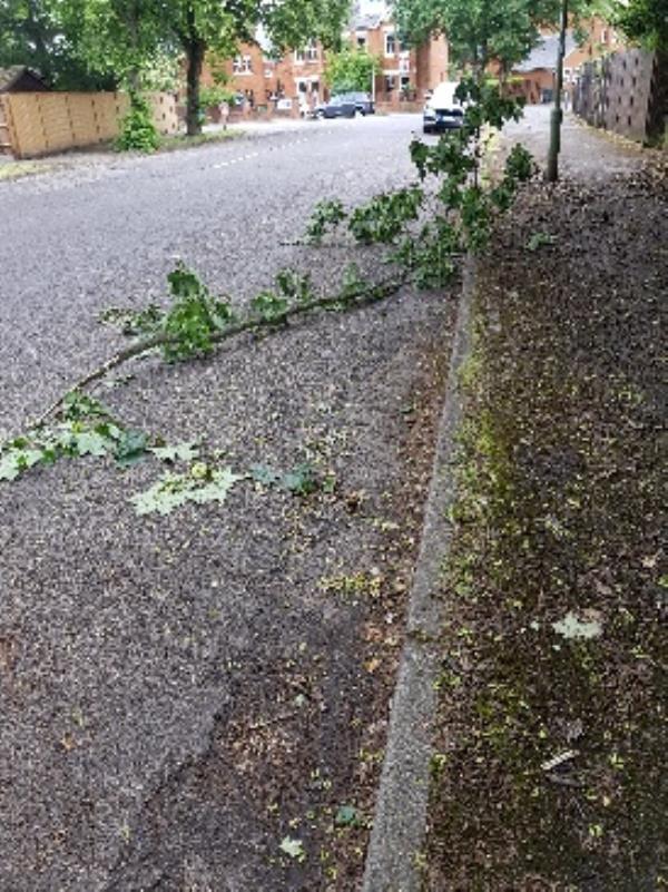 fallen tree branch on the road-82 Guildford Road East, Farnborough, GU14 6QE