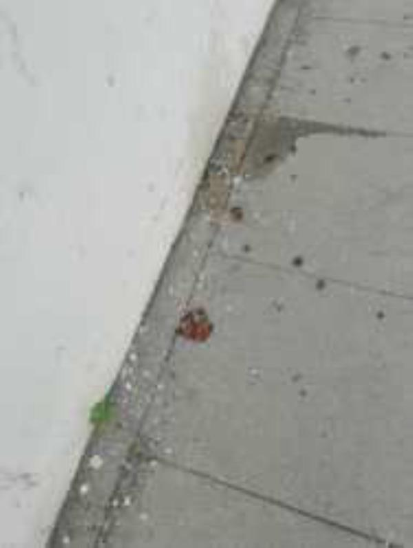 broken glass on the pavement where children walk     -67 Birkhall Road, London, SE6 1TD