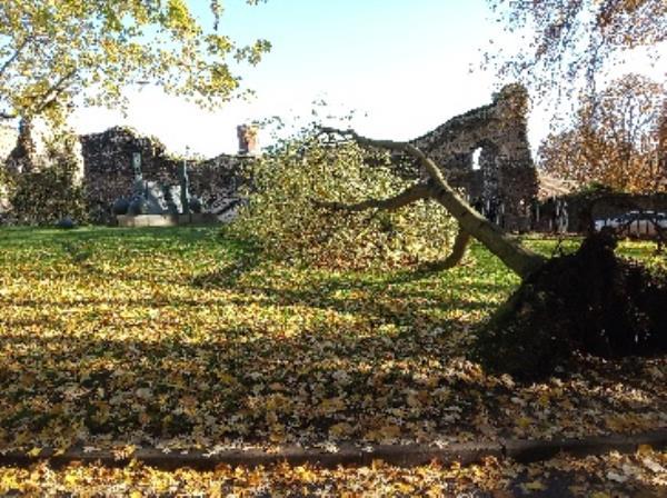 fallen tree by abbey ruins -11 Abbots Walk, Reading, RG1 3HW