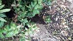 dumped plants still at location -26a Cambridge Road, Aldershot, GU11 3JY