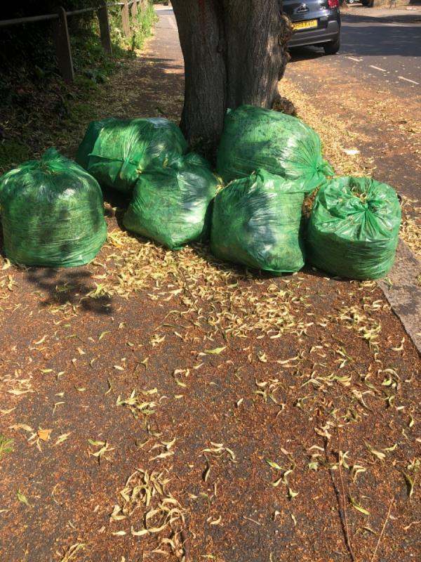 Green sacks of leaves-9b-9f Leopold Road, Ealing, W5 3PB