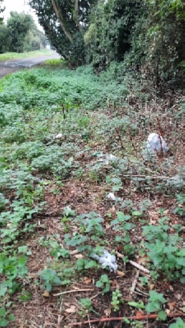 litter on verge -Cow Lane, Reading, RG1 8FN