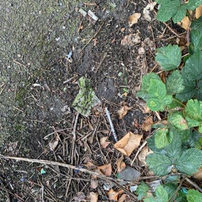 Syringe in bushes. -19 Beck Road, London, E8 4RH