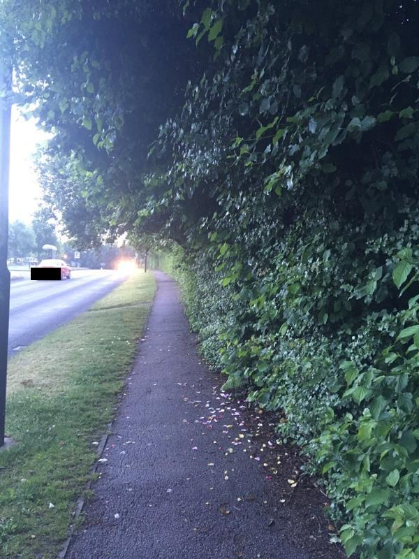 Highway vegetation overhanging and narrowing pavement and blocking street lights after dark. -1 Baylis Crescent, Burgess Hill, RH15 8UP