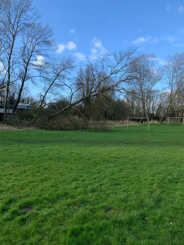 Large Tree half fallen on field hanging very dangerous as children play at the football goals  image 1-176 Renton Road, Wolverhampton, WV10 6XF