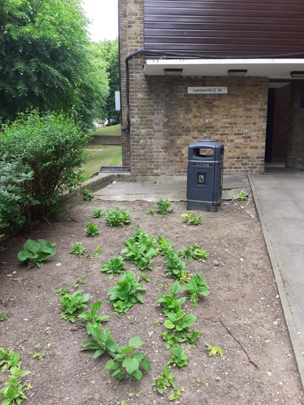 done.-51l Lewisham Hill, Lewisham, SE13 7EH