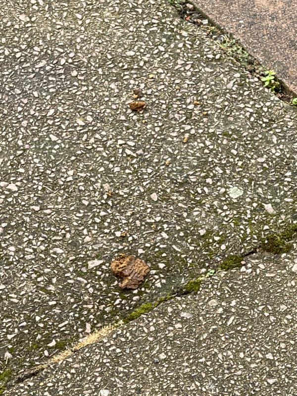 Dog muck outside 19 tyrrell street-19 Tyrrell Street, Leicester, LE3 5SB