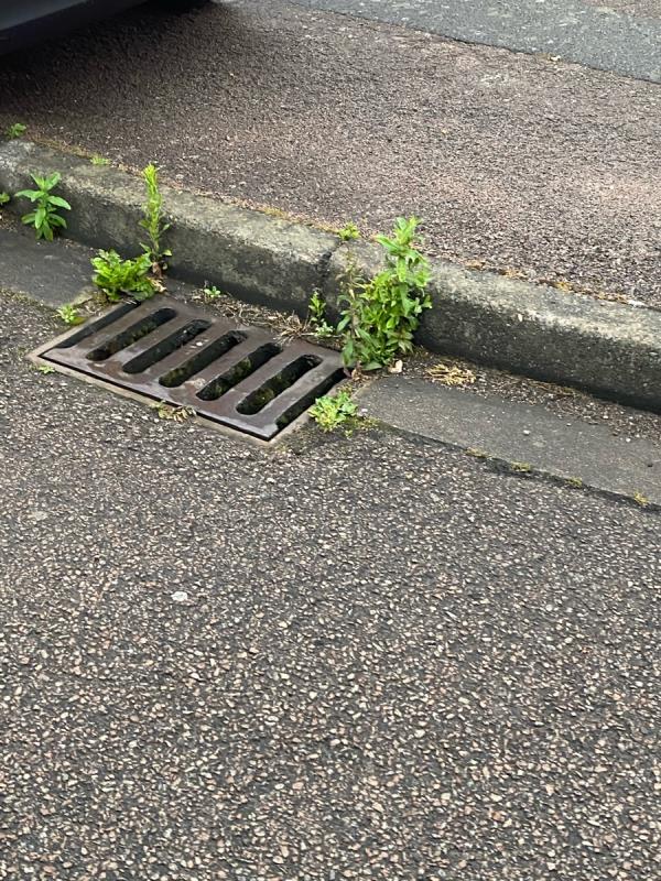 Weeds in and around Alderton close-49 Alderton Close, Leicester, LE4 7RN