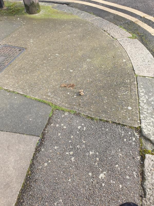 dog poo-3 Sandford Road, London, E6 3LY