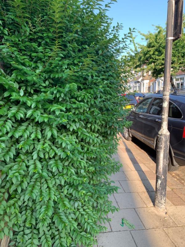 Overgrown path-37 Stock Street, Plaistow, E13 0BX