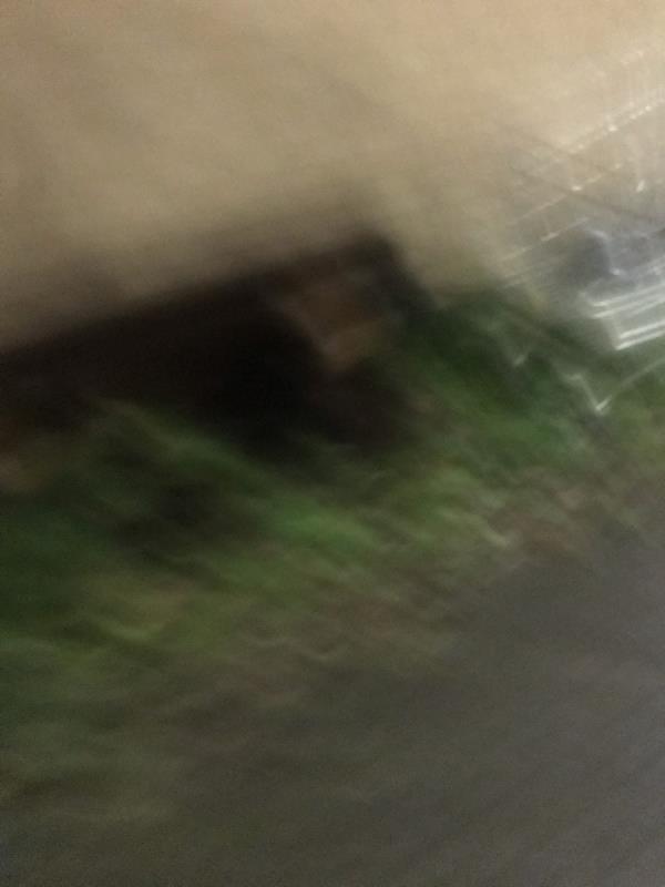 Shopping trolley and wood abandoned -2 Hide, London, E6 6ZA