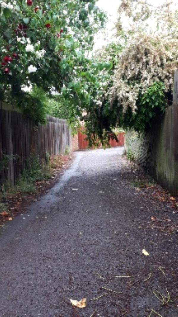 Overgrown trees blocking footpath-28 Minton Cl, Reading RG30 6ET, UK