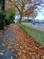 leaf buildup on path, very slippery image 1-11 Laburnum Road, Aldershot, GU11 3DU