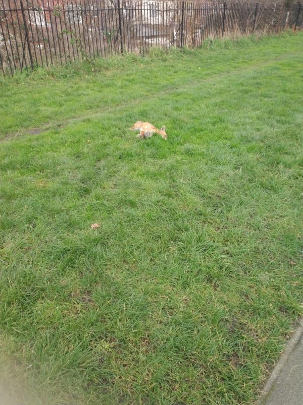 dead fox on the middle of Greenway-94 Lonsdale Avenue, East Ham, E6 3JX