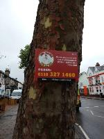 peri peri flyposts screwed to several council plane trees along caversham rd image 1-127 Caversham Road, Reading, RG1 8AS