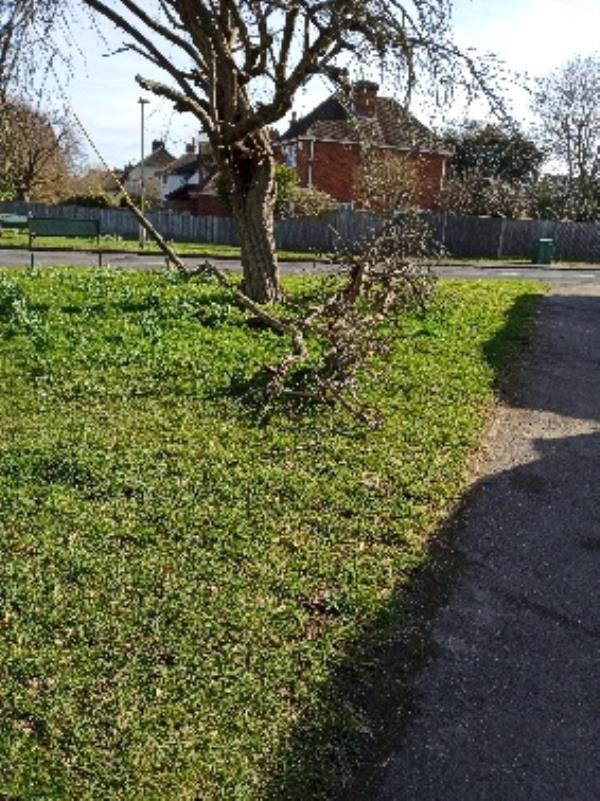 damaged tree corner of Shepherd Lane and Woodcote Way-51 Shepherds Lane, Reading, RG4 7JJ