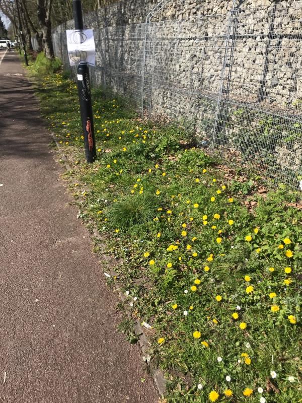 Felt pen tags are located on ALL lamp columns along a public footpath entrance opposite Perivale Tube station Horsenden Lane South leading to Scorton Avenue Ub6  image 2-40b Scorton Avenue, London, UB6 8LA