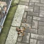 Dog fouling at the entrance of Shoreditch Park Primary school. -82 Bridport Place, London, N1 5JU