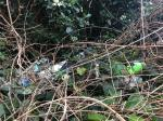Hedgerow full of litter & badly overgrown.  image 1-6 Edgar Milward Close, Reading, RG30 6AA