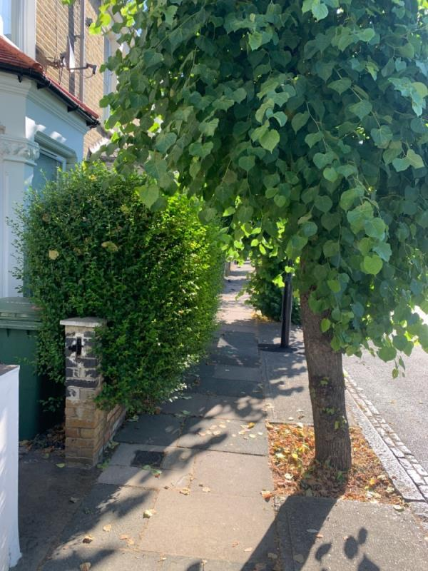 All the trees need cutting back - you need to walk down the street -29 Vaughan Road, London, E15 4AA