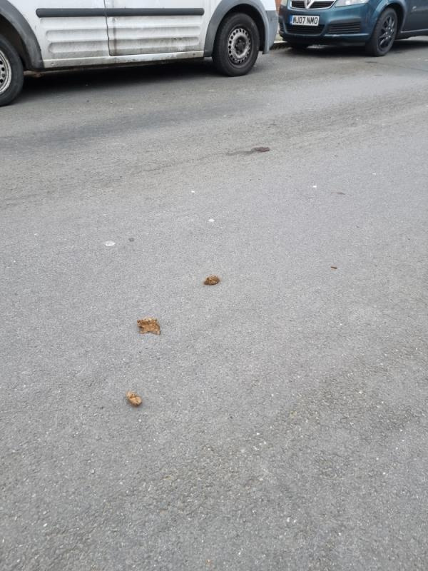 Dog fouling on road -41 Argyll Avenue, London, UB1 3AT