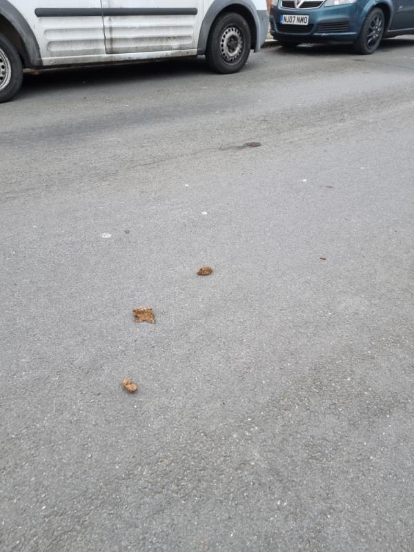 Dog fouling on road -41 Argyll Avenue, London, UB1 3AT