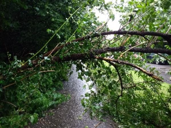 fallen tree blocking footpath. have been reporting problems with this for weeks-69 Dee Rd, Reading RG30 4BD, UK