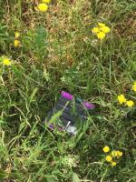 "Rubbish in the park. Rubbish in the overgrown grass. Newham council ignoring local residents. We asking to cut overgrown grass in our parks around perimeter but they just ignoring us. Nobody want to step inside ,grass almost a meter high. Thank you Newham council,you really working ""hard"" to make us happy!!!  image 2-140 Savage Gardens, London, E6 5NE"