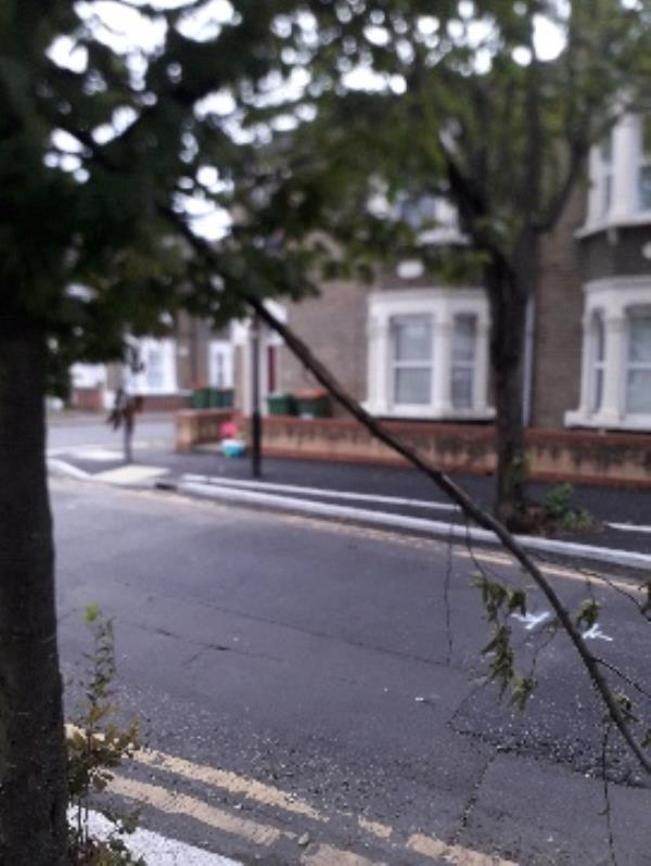 trip hazard from broken branch outside 129 Cambus road E16 -136 Cambus Road, London, E16 4AU